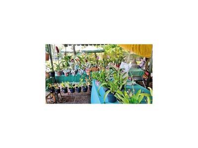 Exposición de flores y plantas, homenaje al amor en Caacupé