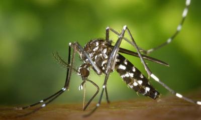 Dengue: Salud confirma 94 casos y 7 de chikungunya – Prensa 5
