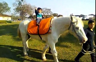 Matan a caballo utilizado en equinoterapia para niños