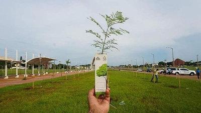 Digno de destacar: Jóvenes sanjuaninos lanzaron proyecto de reforestación ~ Digital Misiones