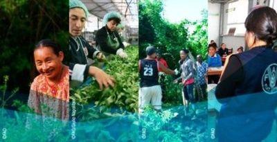 Cursos virtuales con tutor de la FAO