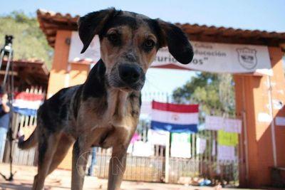 Pedirán a Abdo crear una entidad de defensa y bienestar animal