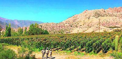 Novedades en vinos argentinos
