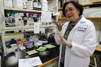 Hallan en México una cura para combatir la gastritis
