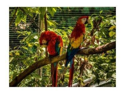 A estirón de pelos y arañazos en pelea por un papagayo