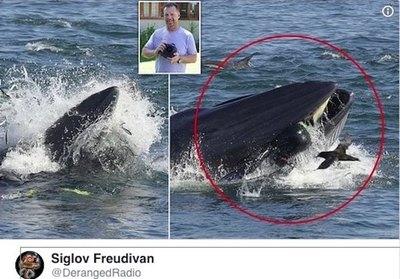 Una ballena se tragó a un buzo y upéi ¡lo escupió!