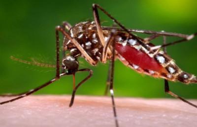 Instan a no bajar la guardia en la lucha contra el mosquito Aedes