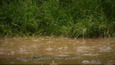 Reporte Ciudadano: Algunas zonas del Chaco superaron los 150mm y 200 mm de lluvia caída