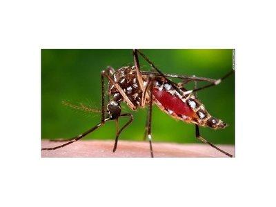 PJC: Dos pacientes con síntomas de dengue trasladados a la capital