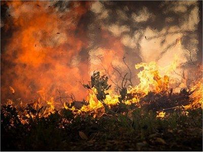 Inventan una tela sintética para salvar vidas en incendios forestales