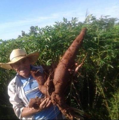 Don Rufi produce la mejor mandioca en Loreto