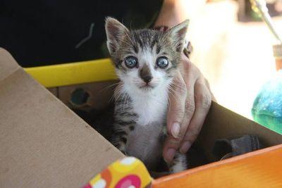 """Organizan """"Gatotón"""" a beneficio de felinos, en la Costanera"""