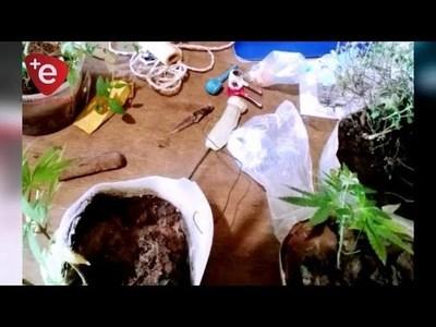 Requisan plantines de marihuana y armas en penal de Itapúa
