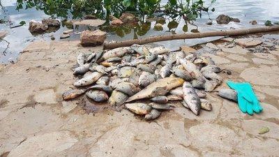 Falta de oxígeno mató a peces