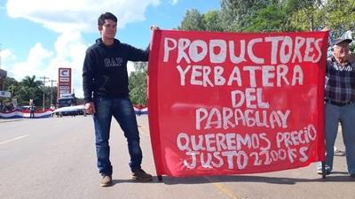 Productores de yerba se desesperan ante la baja de los precios del rubro