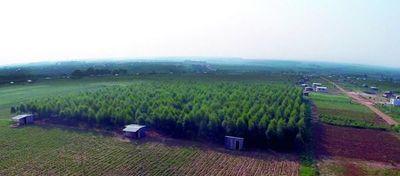 FAO financiará reforestación para 8 departamentos del país