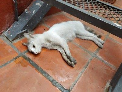 Denuncian una matanza voi de gatos en San Lorenzo