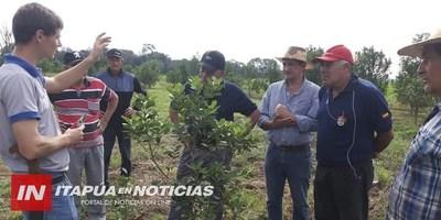 CNEL. BOGADO: REALIZARÁN PRIMER CORTE EN PLANTACIONES DE YERBA MATE