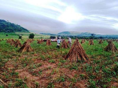 Presentaron resultados de Proyecto de apoyo a rubros exportables de pequeños productores