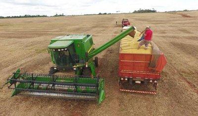 Bajos precios y rindes para la soja zafriña golpean al agricultor