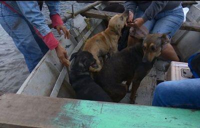 Piden ayuda para seguir rescatando mascotas