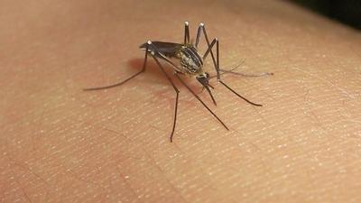 En una semana duplicaron los casos fatales por dengue