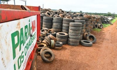 1.500 neumáticos son eliminados diariamente en campaña antidengue