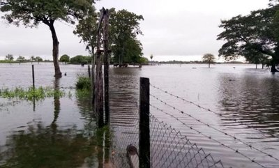 Ante inundación, buscan campos vacíos para trasladar al ganado
