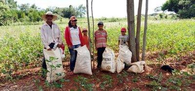 Productores de algodón reportan dificultades