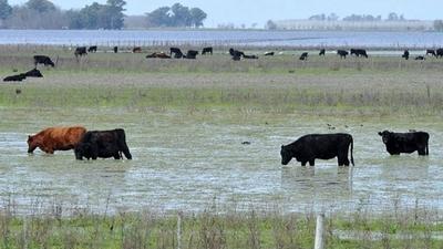 HOY / Inundaciones golpean fuertemente al sector ganadero