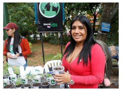 Anuncian acciones contra organización por regalar plantitas de marihuanas