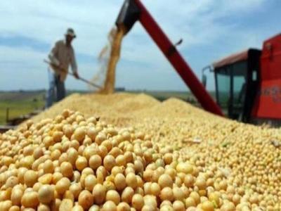Caída del precio internacional de la soja preocupa a productores