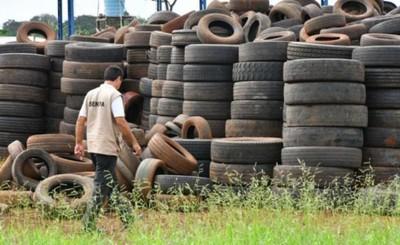 Pará-na los criaderos: trabajos de rastrillaje y fumigación de hoy
