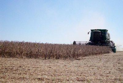 Divisas de soja caerán en unos US$ 1.340 millones