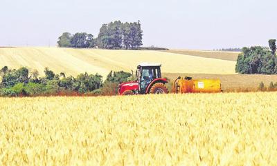 No hay expectativas para el trigo