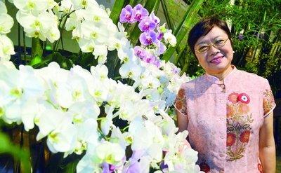 Elegante orquídea en la Semana de la Madre y la Patria