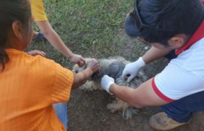 Brindan recomendaciones a dueños de mascotas en circunstancias de inundación