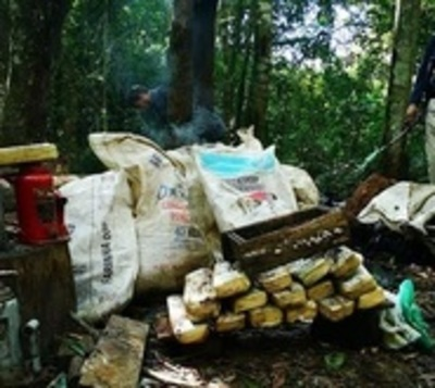 Destruyen casi media tonelada de marihuana en Caaguazú