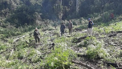 Operativo Antidroga deriva en la incineración de 5 plantaciones de marihuana