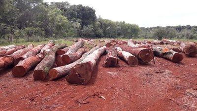 El poder político estaría tratando de blanquear  tala selectiva en Tagatiya Mi y facilitar su venta