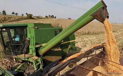 Caída de zafra sojera y pérdida de divisas preocupa a productores del rubro
