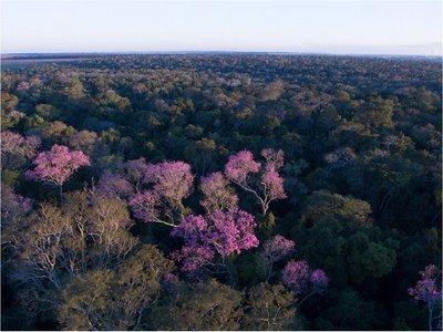 Constatan desmonte y tala en reserva natural de Campos Morombí