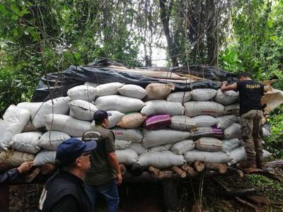SENAD Y MADES DETECTAN GRAN DEFORESTACIÓN PARA PRODUCCIÓN DE MARIHUANA EN CAAZAPÁ