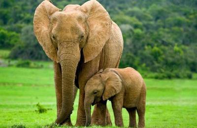 Botsuana autoriza la caza de elefantes para fomentar los safaris
