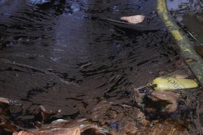 Combustible llega a arroyo y causa muerte de peces