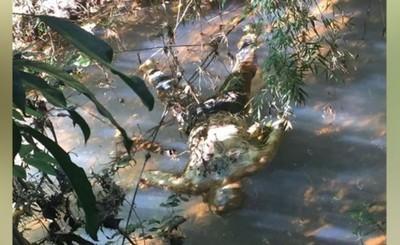 Encuentran cadáver en arroyo