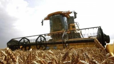 Una bacteria sin identificar afecta al trigo brasileño
