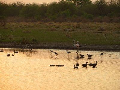 El Chaco un polo de desarrollo que debe acompañar al medioambiente