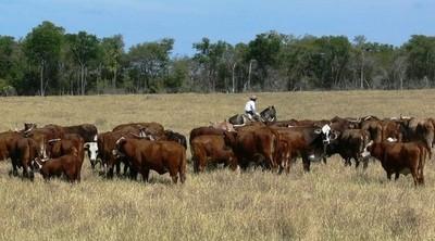 Paraguay busca exportar un importante volumen de ganado en pie a Kazajstán