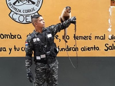 Critican a los Linces por tener un mono como mascota